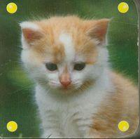 Mini kosteczka kot - brak
