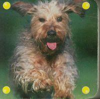 Mini kosteczka Pies - brak